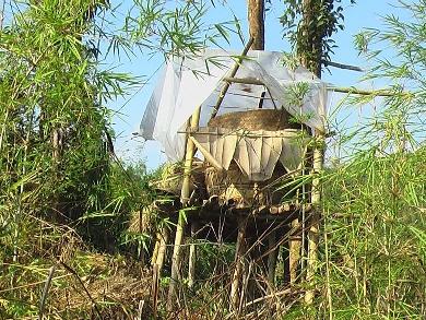 Rice storage
